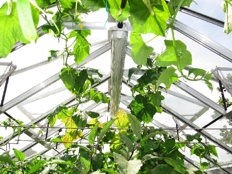 Green house lighting